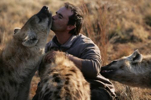 Kevin Richardson with hyenas