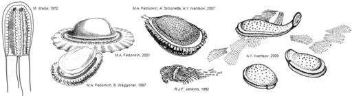 Kimberella reconstructions