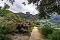 Kirstenbosch Botanical Garden-3138.jpg