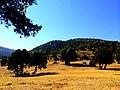 Kozağaç taşı - panoramio (1).jpg