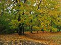 Kraków - park bednarskiego.....jpg