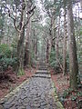 Kumano Kodo pilgrimage route Daimon-zaka World heritage 熊野古道 大門坂37.JPG