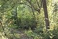Kurcaparti tanösvény Mindszent - panoramio (50).jpg