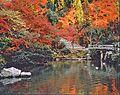 KyotoAutumn2.jpg