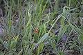 Ladybug in the farm.jpg