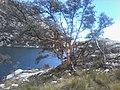 Laguna Churup - panoramio (1).jpg