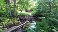 Lahemaa - beavers dam.jpg
