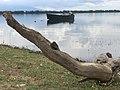 Lake Kerkini fishing boat.jpg