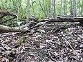 Landschaftsschutzgebiet 14974 Ludwigsfelde Pechpfuhl 05.jpg