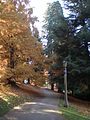 Laurelhurst Park, sidewalk, light in Nov. 2011.JPG