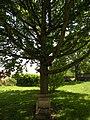 Le Heaulme chene du bicentenaire.JPG