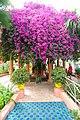 Le jardin des majorelle 7538.JPG