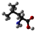 Leucine-ball-and-stick.png