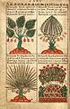 Liber Floridus-Gand-f140-2.jpg