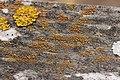Lichen (41077560500).jpg