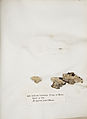 Lichenes Helvetici IX X 1833 024.jpg