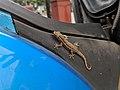 Lizard 11.jpg