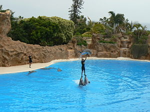 English: Dolphin Show in Loro Parque, Puerto d...
