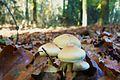 MOs810, WG 2013 21, OChK Baszkow Rochy (mushrooms II).JPG