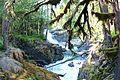 MRNP — Silver Falls (14714775598).jpg