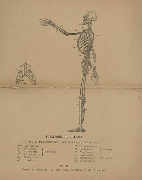 File:M Foster - Fysiologi.djvu