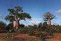 Madagascar (8611010954) (2).jpg