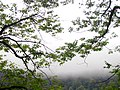 Mahmudabad, Mazandaran عکس از جنگل های مازندران-محمود اباد.jpg