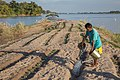 Man watering cucumbers plantation on small island.jpg