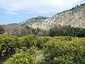 Mandarin Field - panoramio.jpg