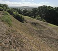Maori terraces and kumara pits, on Big King, Auckland.jpg