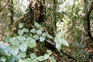 Military camouflage Camouflage used to protect from enemy observation