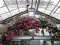 Mediterranean - US Botanic Gardens 05.jpg