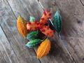 Melão-de-são-caetano (Momordica charantia).png