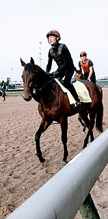Mendelssohn (horse) American-bred Thoroughbred racehorse
