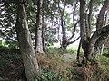 Menhir-Guernangoue5.jpg