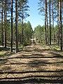 Metsätie Hyyppärän harjualueella Somerolla.JPG