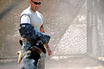 Military Working Dogs training in Baghdad, Iraq DVIDS173845.jpg
