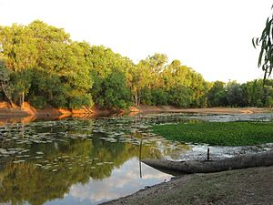 Mitchell River (Queensland) - 'Rich variety of aquatic habitats' - Magnificent Lagoon immediately next to Kowanyama township