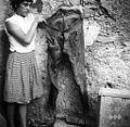 Moške jerhaste hlače, Podraga 1958.jpg