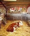 Modern cowhouse - geograph.org.uk - 296790.jpg