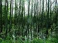Mokradła - panoramio (3).jpg