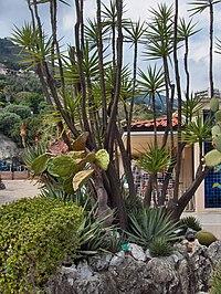 Monacos exotiska trädgård, Jardin Exotique