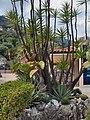 Monaco.Jardin exotique017.jpg