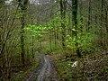 Monarch's Way in Whitedown Plantation - geograph.org.uk - 1279824.jpg
