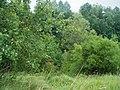 Monheim Weilheim Schliffflächen am Bahnheimeinschnitt 005.jpg