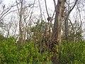 Monkies on trees.JPG