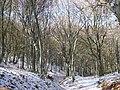 Monte San Vicino-Sentiero neve.jpg