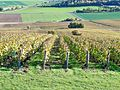 Montgueux vignoble 04.jpg