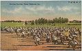 Morning exercise, Camp Claiborne, La. (8185174296).jpg