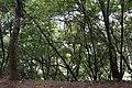 Mount Lala Eco Park 拉拉山生態園區 - panoramio.jpg